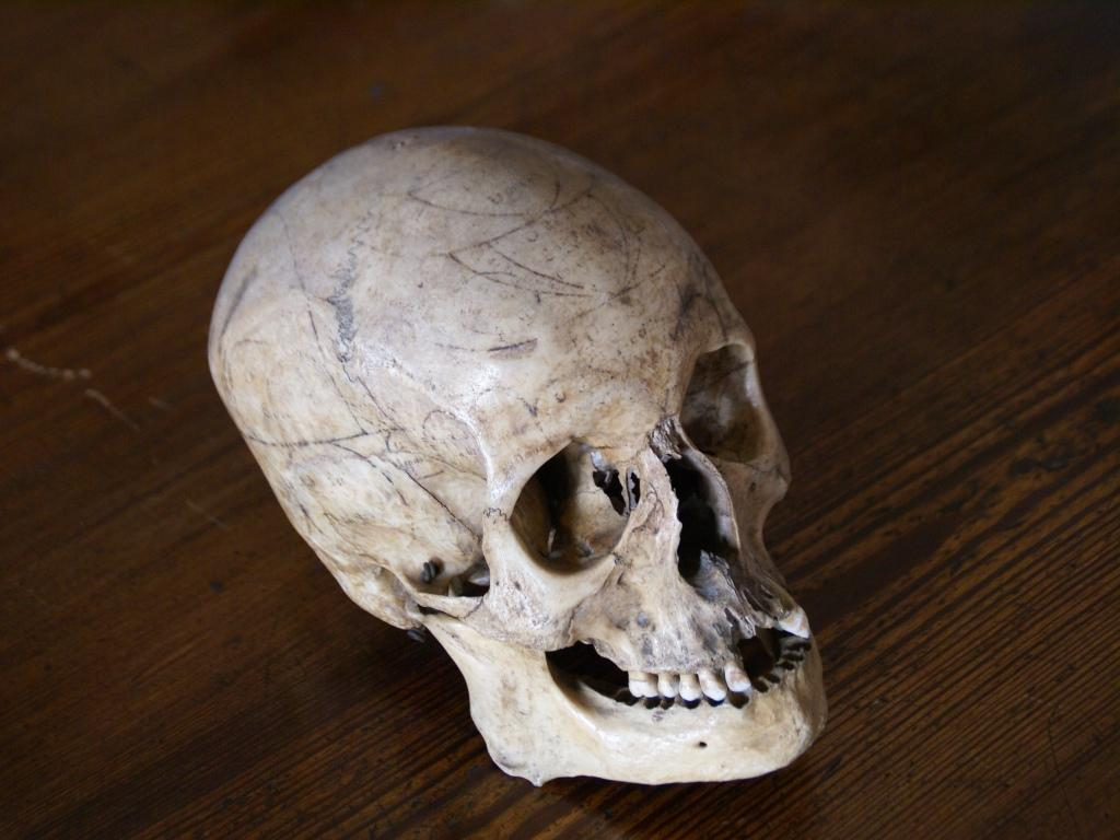 Museo di Anatomia Turijn